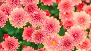 flowers-482575_1280