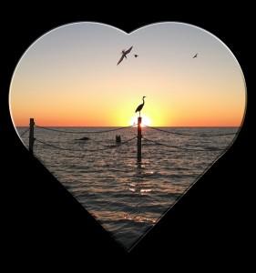 Birds Love Sunset MGD©