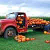 pumpkintruck